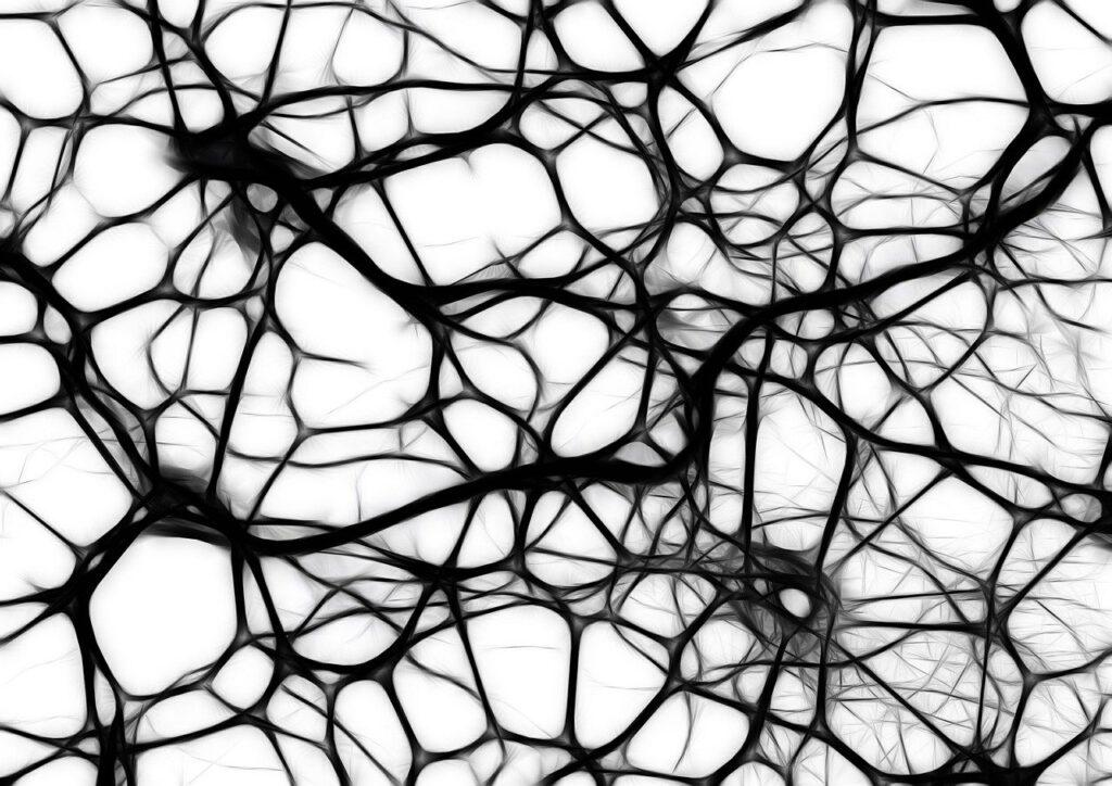 Gehirnstruktur Neuronen